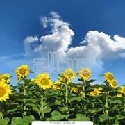 фото предложения ID 18668362