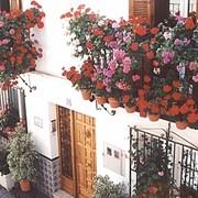 Озеленение фасадов фото