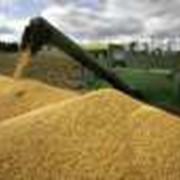 Переработка зерновых культур фото
