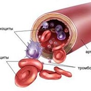 Иммуноглобулины фото