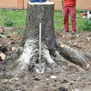 Спил аварийных деревьев в алматы