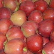 Яблоки свежие красные фото