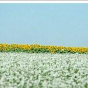 Услуги авиации в сельском хозяйстве в Украине, Запорожье Авиакомпания Агроавиа, ООО. фото