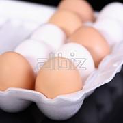 Яйцо куриное, купить фото