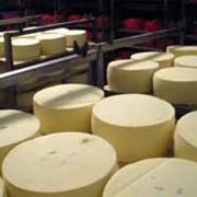 Сыр сливочный фото