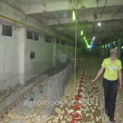 Биоэтанол в Молдове фото