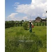 Стрижка газонов фото