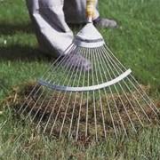 Вычесывание газона после зимы фото