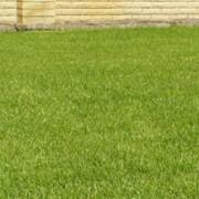 Посев семенного газона, посев газона, ландшафтный дизайн (Киев, Киевская область) фото