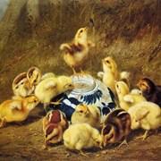 Комбикорм для цыплят ПК 2-2 фото