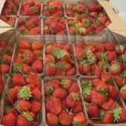 Контейнеры для ягод фото