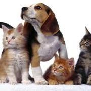 Корма для животных фото