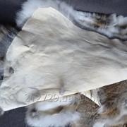 Зимний мех кролика фото