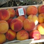 Саженцы персика Ред Хейвен фото