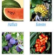 Продажа фруктов фото