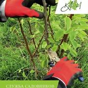 Услуги службы садовников фото