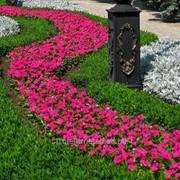 Создание сенсорного сада №11 фото