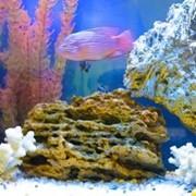 Керамические декорации для аквариума фото