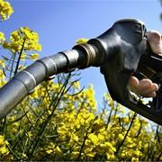 Экспорт твердого биотоплива: пеллеты фото