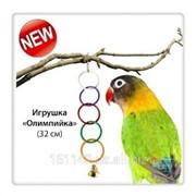 Колечки для попугаев Олимпийка фото
