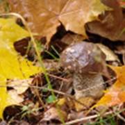 Переработка и реализации грибов