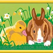 Картинки по номерам Кролик и утенок фото