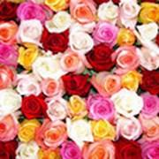 Минеральное органическое удобрение для роз