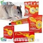Мыши, грызуны фото