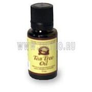 Tee Tree Oil (Масло чайного дерева) фото