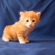Daiki Genkina neko - чудесный котенок. фото