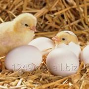 Премикс для выращивания птицы Старт 2% фото