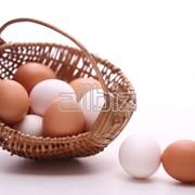 Яйца куриные фото