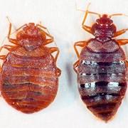 Уничтожение вредных насекомых и грызунов (клопов, тараканов, блох и др.) фото