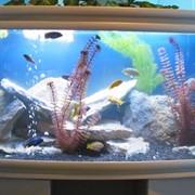 Товары для аквариумистики фото