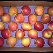 Яблоки Бребурн, Чили фото