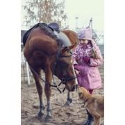 Детские праздники с участием лошадей фото