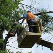 Спиливание деревьев в Самаре. Валка деревьев. Обрезка деревьев. фото