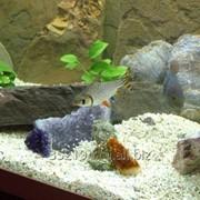Грунт фильтр в аквариум фото
