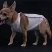 Обработка послеоперационной раны животного фото
