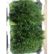 продаем зелень из Испании фото