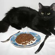 Витамины, минералы и подкормки для домашних животных фото