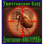Борьба с домовыми блохами, дезинсекция,дезинфекция, дератизация, уничтожение, грызунов,насекомых в Алматы фото