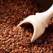 Семена Льна фото