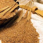 Переработка пшеницы фото
