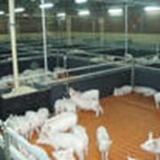 Организация искусственного осеменения сельхозживотных в Личных подсобных хозяйствах фото