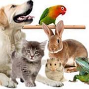 Полное клиническое обследование домашних и экзотических животных фото