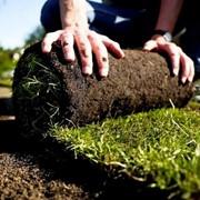 Рулонний газон, трава газонна в рулоні фото