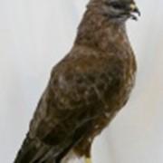 Чучело птиц фото