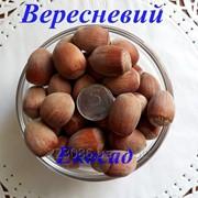 Саженцы фундука сорт Вересневый 2-х лет фото