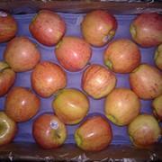 Яблоки, Чили фото